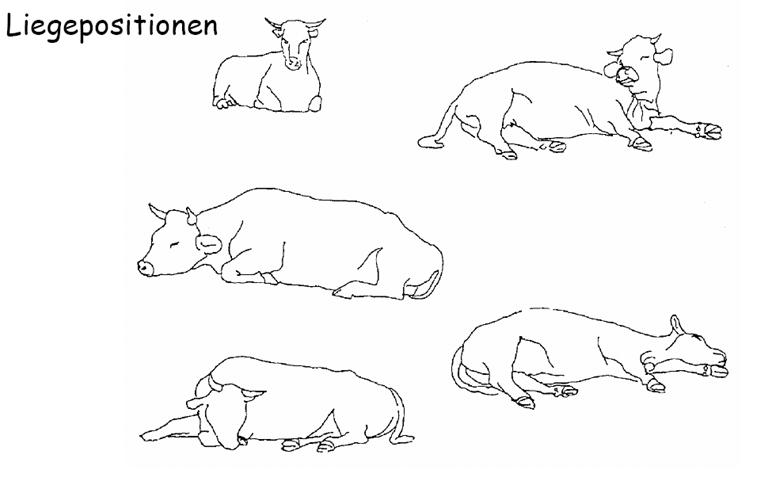 yatma pozisyonları